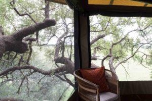 Dove's Nest In Tree The Hide Hwange