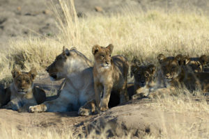wildlife-thehide-hwange-mg-19