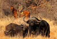 wildlife-horseback-buffalo-thehide-hwange
