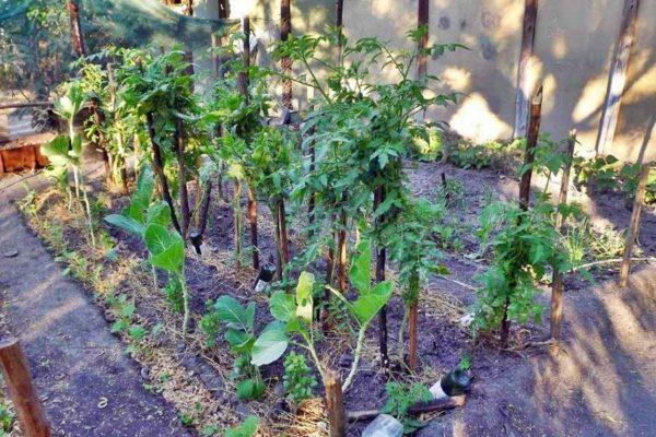 the-hide-community-trust-garden