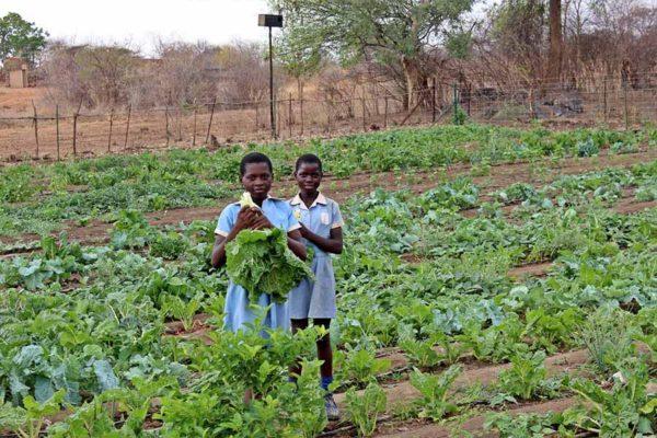 the-hide-community-trust-vegetable-garden