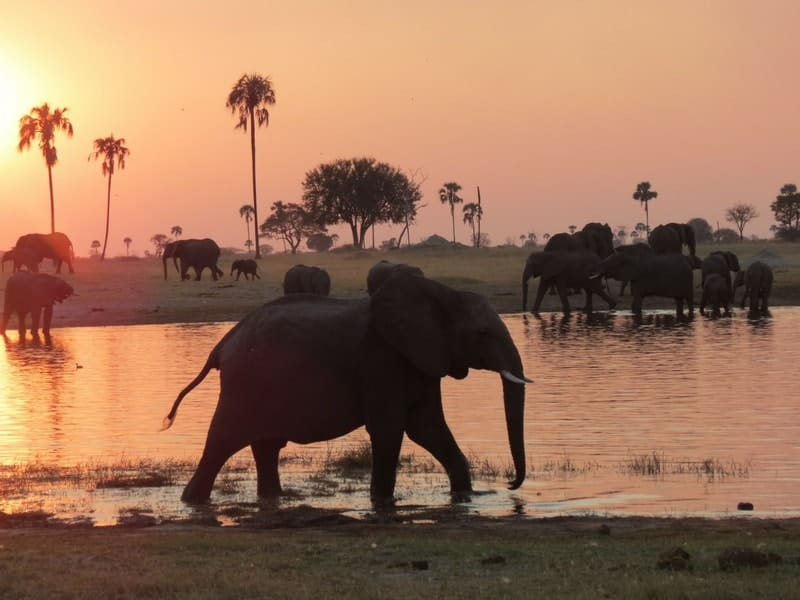 The Hide Elephant Sunset