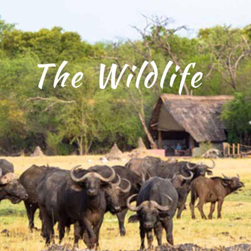 Romantic Safari Wildlife