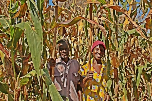 The Hide Conservation Agriculture