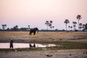 Elephant At The Hide