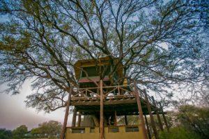 Doves Nest The Hide