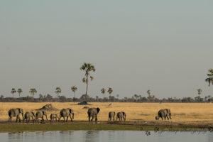 The Hide Elephants Walking