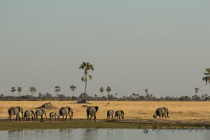 The Hide Elephants Walking