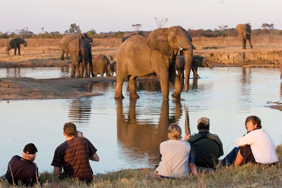 Elephants Game Viewing At the Waterhole The Hide
