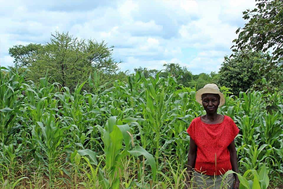 The Hide Conservation Farming