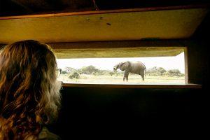 Elephant Hwange National ParkThe Wine Cellar and Waterhole Hideaway