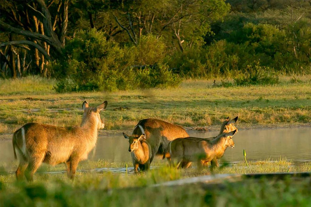 Antelope - Game Drive At The Hide Hwange National Park