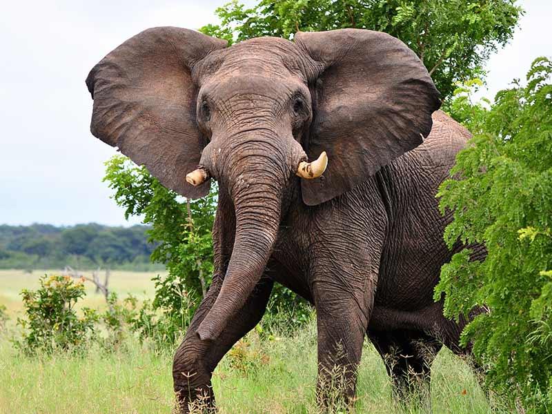 Elephant Hwange National Park