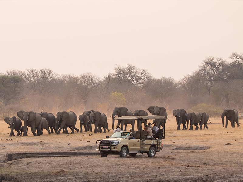 Game Drive Hwange National Park
