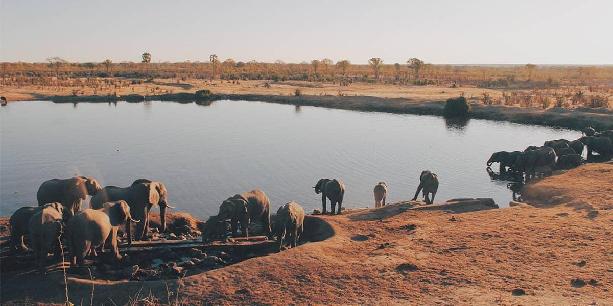 Elephant Herd - Photo by Christine Donaldson