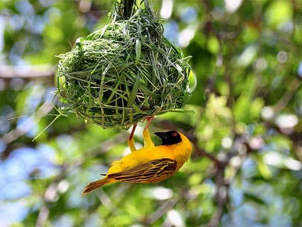 Bird Watching Hwange National Park