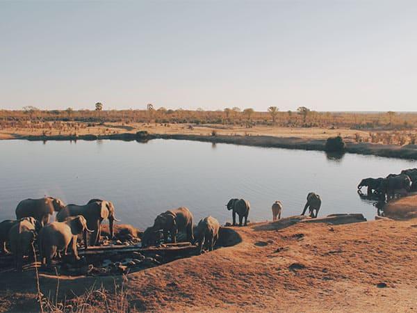 Elephants at waterhole - Christine Donaldson