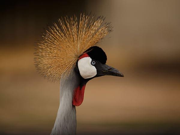 Birds of Hwange National Park - Roi Dimor