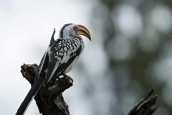 Birding Hwange National Park - Photo by Neil Fairlie
