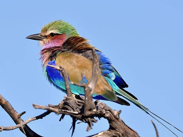 Birding Hwange National Park