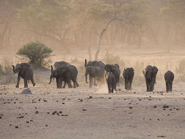 Elephants Hwange National Park