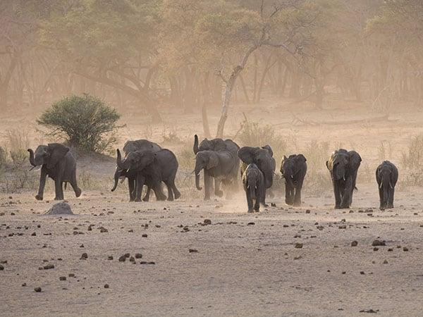 Elephants Hwange National Park