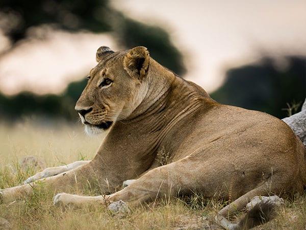 Big 5 Hwange National Park