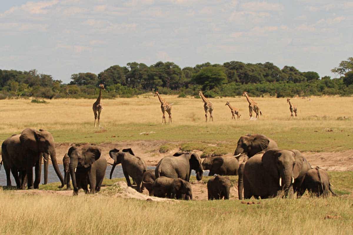 Hide Elephant Giraffe Waterhole Game Count