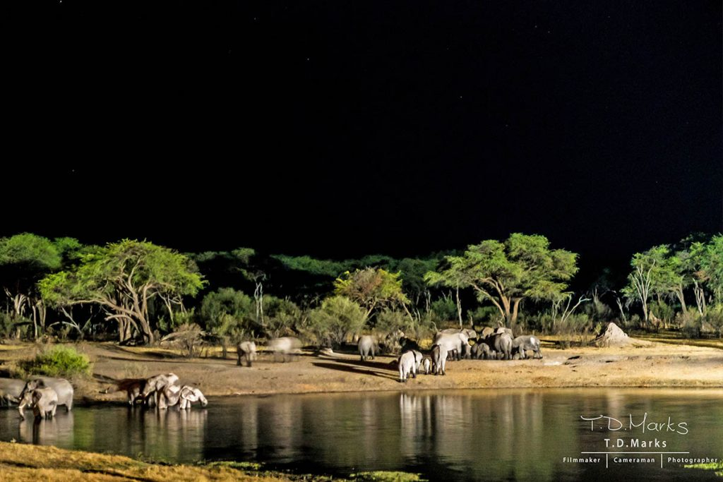 Hide Night Waterhole Game Count