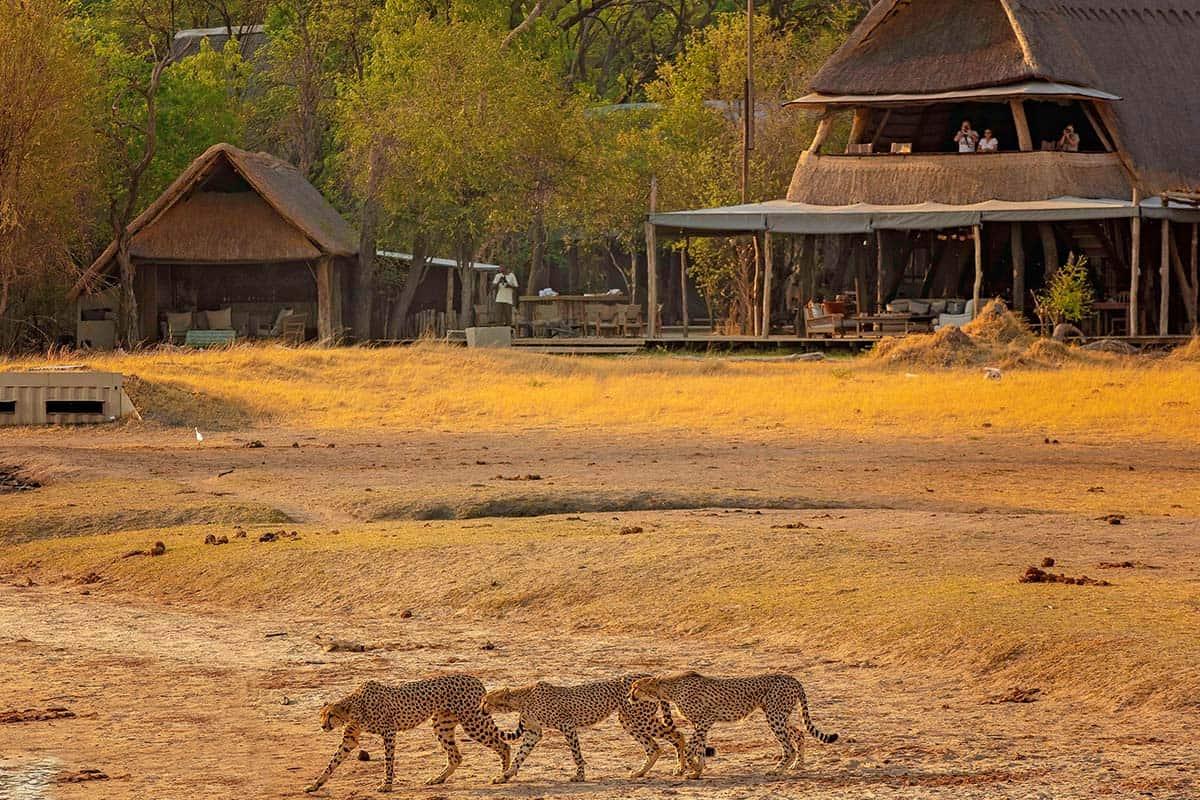 African Safari Hwange