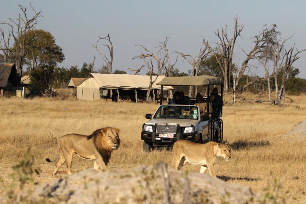 Seniors on Safari
