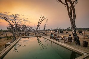 The Private Hide Hwange Gallery 12