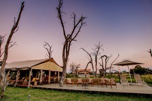 The Private Hide Hwange Gallery 5