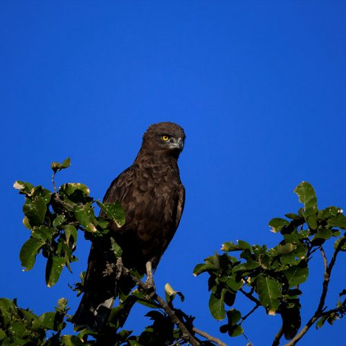 Birding The Hide 8