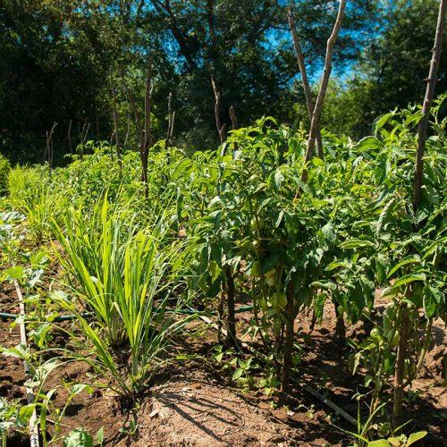Conservation Agri 3