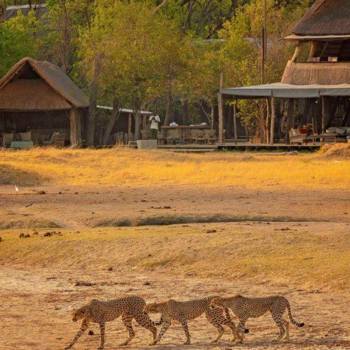 Family Safari The Hide Watching