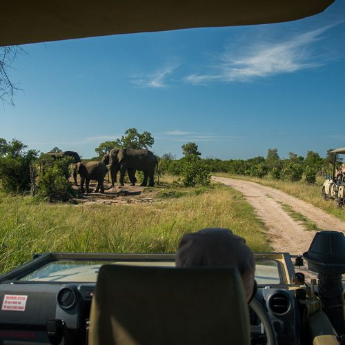 Game Drive The Hide Elephant Herd