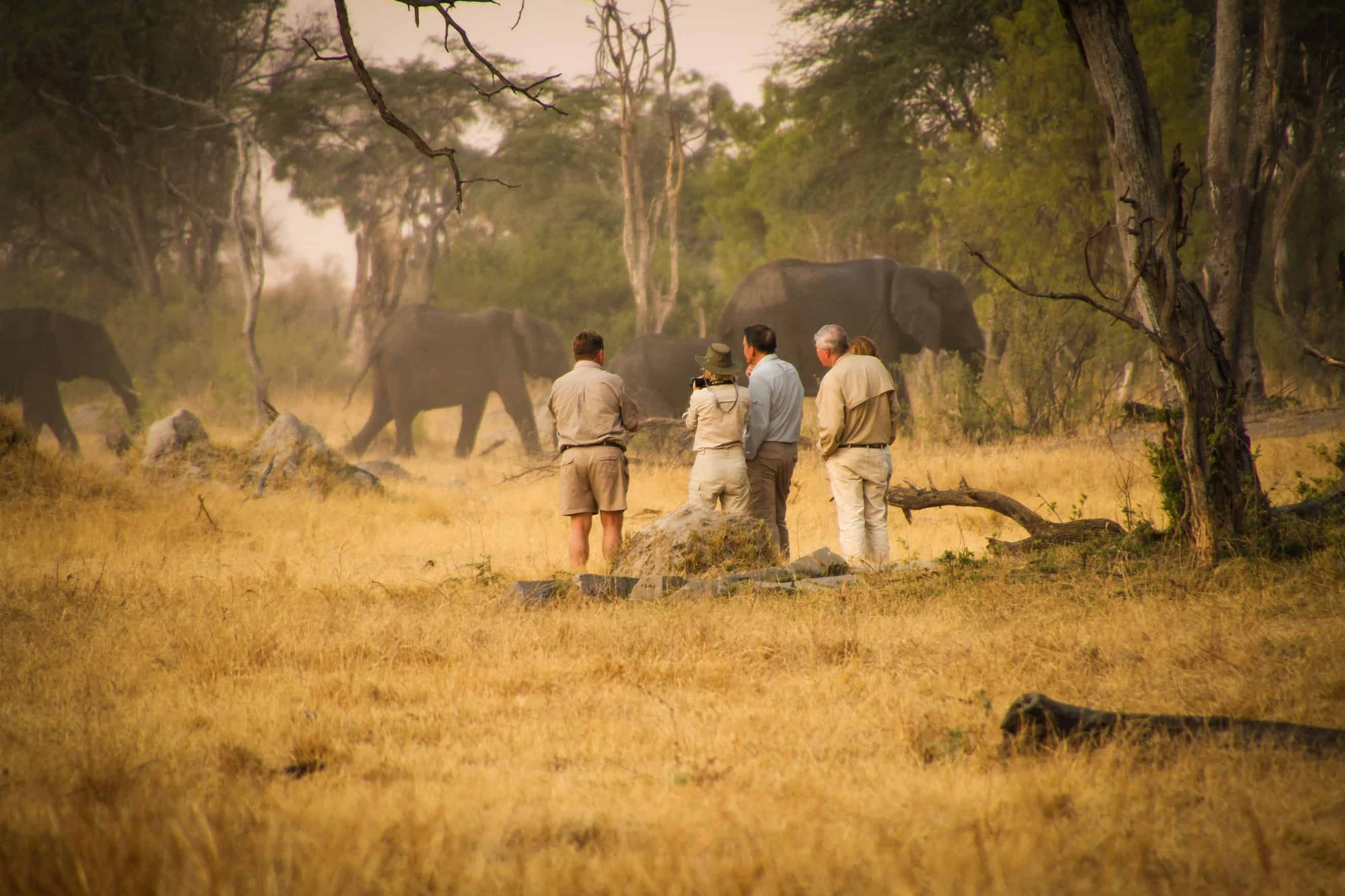 Elephants - Game Drive At The Hide Hwange National Park