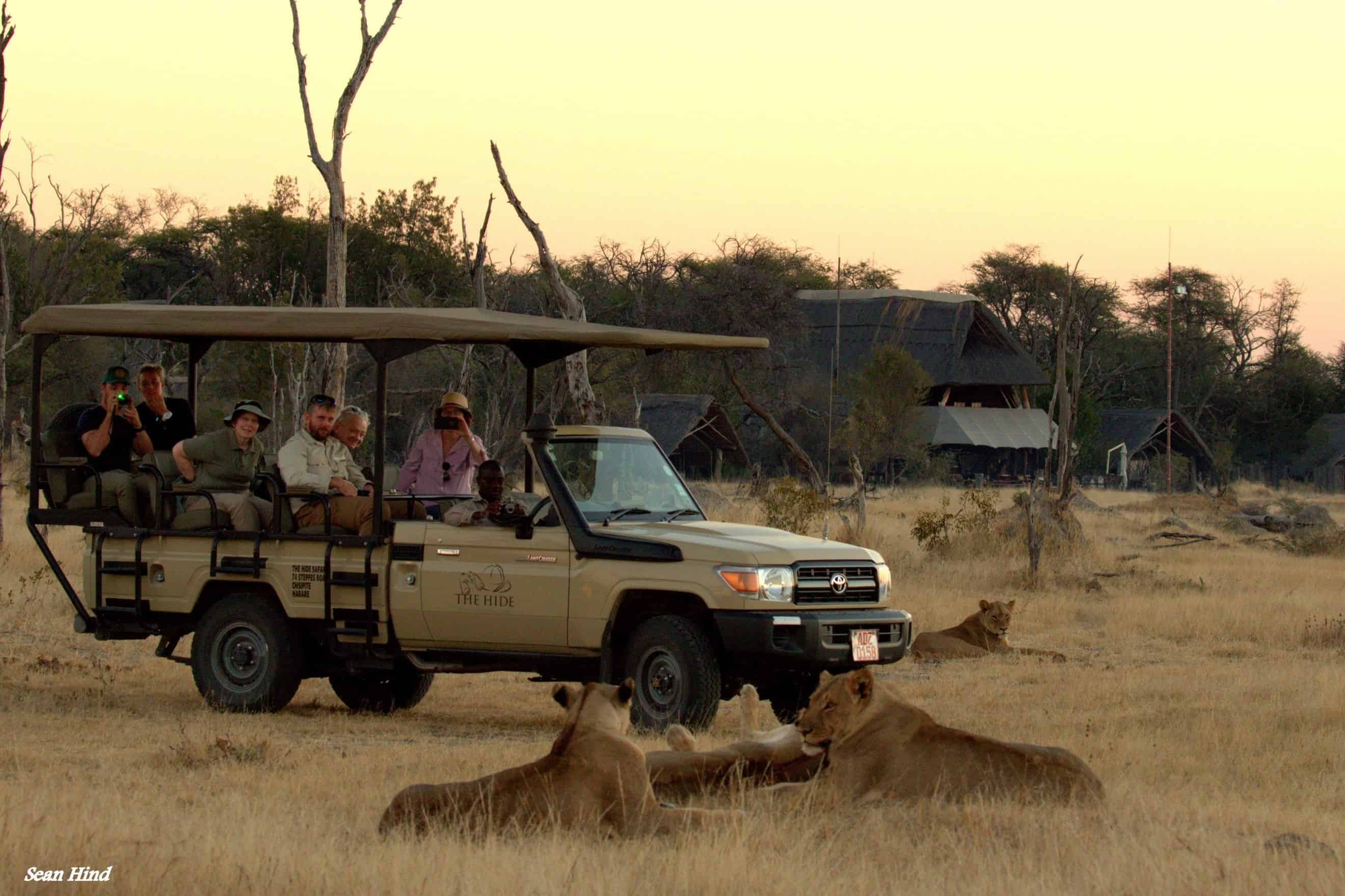 Lions Game Drive At The Hide Hwange National Park