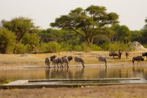 The Hide Waterhole