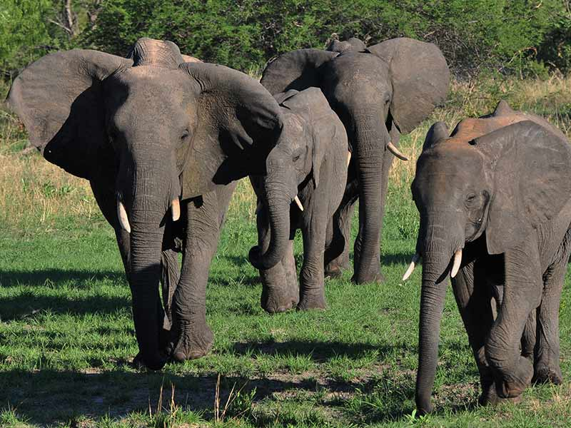 Elephant Herd Hwange National Park