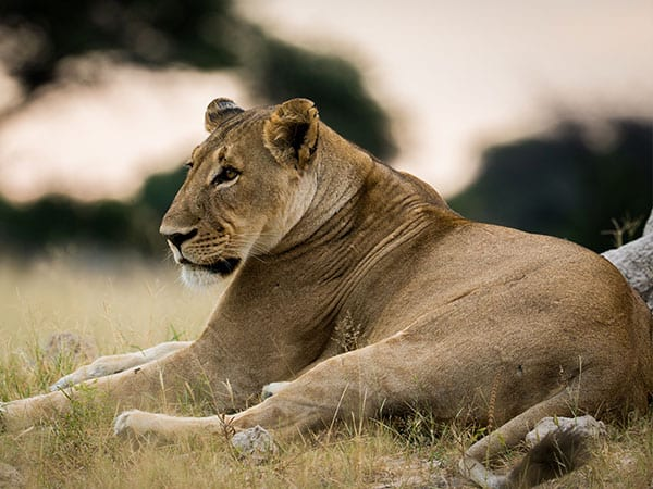 Big 5 Hwange National Park