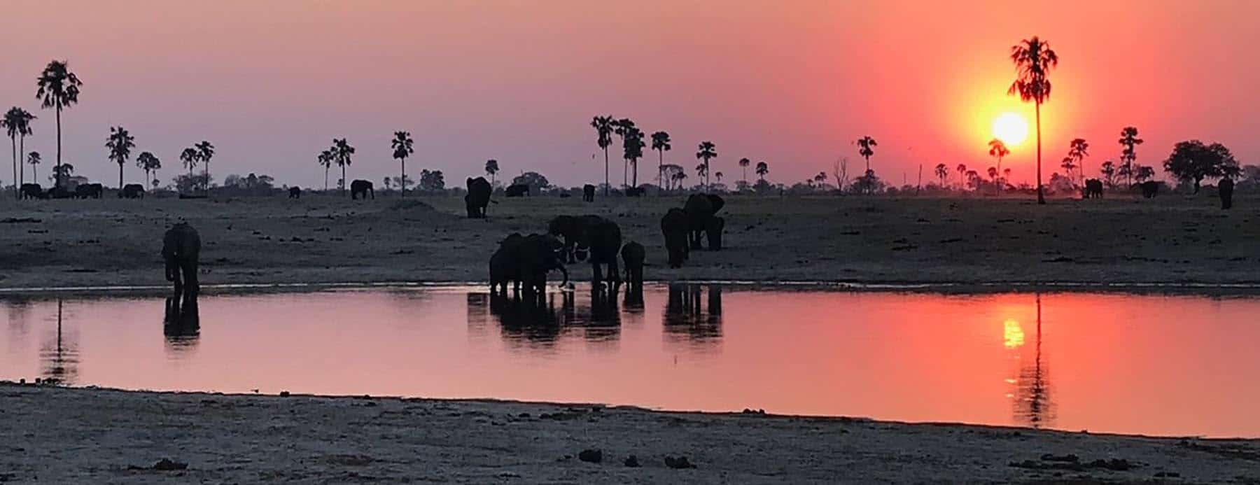 Evening on Safari