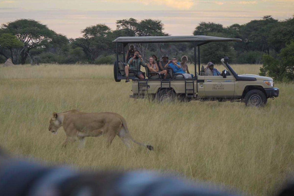 Safari Game Drive Hwange