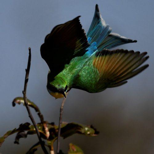 Birding The Hide 4