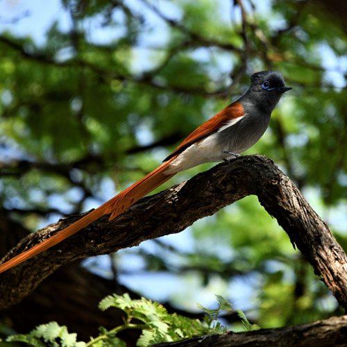 Birding The Hide 6