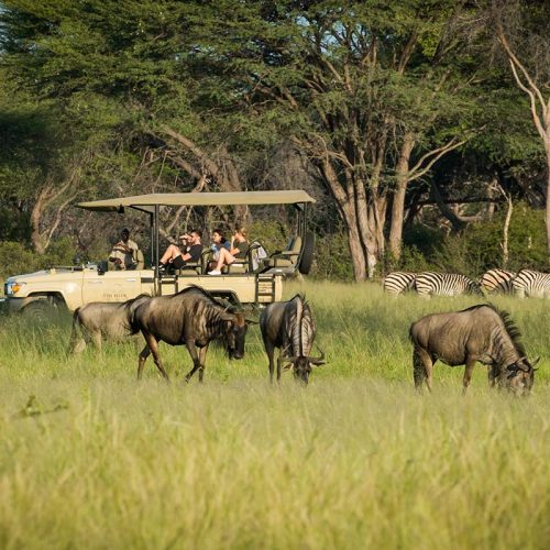 Green Season The Hide Wildebeest