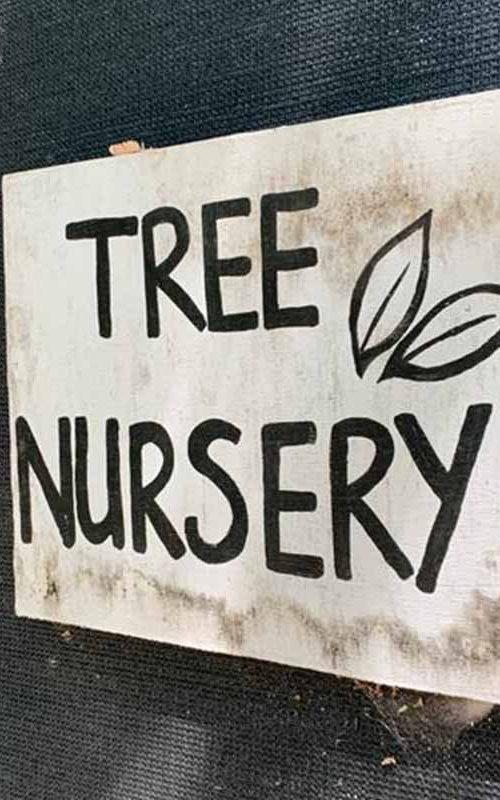 Tree Nursery 3
